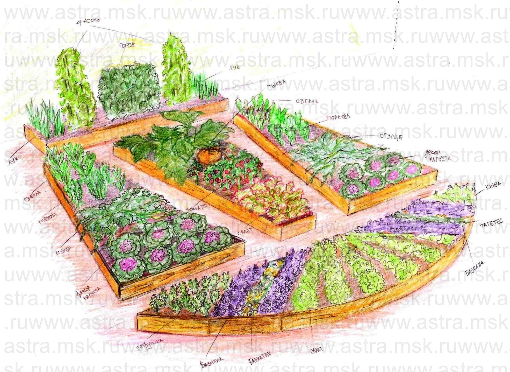 Как правильно сажать огород схемы 61